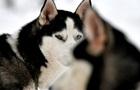 Во Львовской области собаки загрызли мужчину
