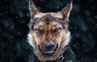 В ДНР собаки загрызли ребенка