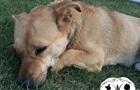 В Одессе охранник рынка умер, не пережив отравления пса