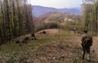 Словаки затримали білоруса, котрий перебіг кордон з України