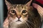 В Днепре кота смыли с дерева с помощью брандспойта