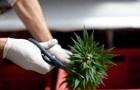 В Нью-Йорке мэр призвал не штрафовать за курение марихуаны