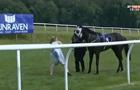 Ведущая остановила коня на скаку, попав под копыта