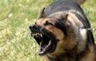 У Києві через скаженого собаку оголосили карантин