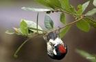 Вчені пояснили, чому у птахів немає зубів