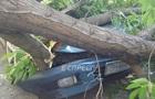 У Києві дерево пошкодило одразу чотири автомобілі