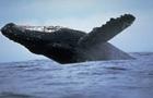 Австралиец показал редкие снимки 20-тонного кита