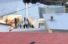 Синего кита убили впервые за 40 лет