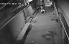 Танець злодія перед зломом потрапив на відео