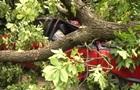 У центрі Львова дерево впало на два автомобілі