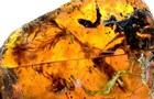 В янтаре нашли детеныша змеи возрастом 100 млн лет