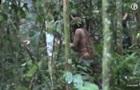 Убезпеченого джунглями тубільця-відлюдника зняли на відео