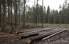 За год из Украины вывезли более миллиона тонн леса