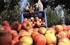 Україна за півроку експортувала агропродукції на $8,6 млрд