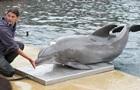 Помер найстаріший дельфін, що жив у неволі