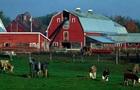 В Швейцарии проходит референдум об импорте продуктов