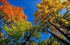 У Києві почалася метеорологічна осінь