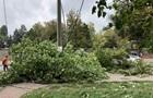 У Львівській області гілка дерева вбила чоловіка