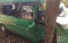 У Кривому Розі маршрутка з пасажирами врізалася в дерево