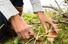 У Харківській області дерево вбило грибника