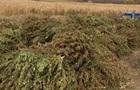 У Запорізькій області в господаря плантації конопель вилучили зброю