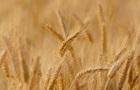 В Україні очікується другий в історії урожай зернових - Мартинюк