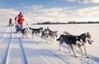 Собачі упряжі визнали видом транспорту в Данії