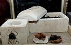 Перші мумії скарабеїв. Нові гробниці в Єгипті