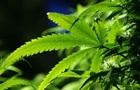Україна вперше видала ліцензію на виробництво продуктів з марихуани