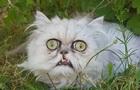 Фото  найстрашнішого  кота стали вірусними