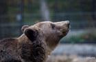 В Харьковской области на женщину напал медведь