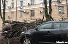 В Одесі, упавши, дерево пошкодило десять авто