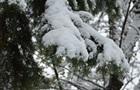 Негода в Україні: знеструмлено 16 населених пунктів Житомирської області