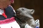Власти Австралии призвали  уважать  вомбатов