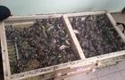 У Борисполі вилучили 1600 контрабандних щигликів