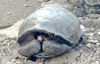 На Галапагосах нашли гигантскую черепаху из вымершего вида