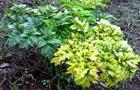 Ученые нашли растение, продлевающее молодость