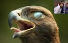 Зрелищное видео: орла сняли в замедленной съемке
