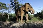В Таиланде игривый слон  утопил  туристов