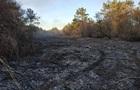 В Одеській області загасили масштабну пожежу в лісовому масиві
