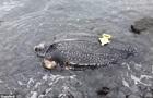 Рідкісну гігантську черепаху виявили мертвою