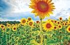 Житница не только Европы. Как живут украинские аграрии