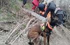 У Дніпрі собака знайшов жінку, яка просиділа в колодязі дві доби