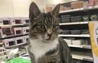 Кіт розгромив магазин у Києві