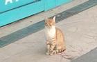 Кішка-охоронець у супермаркеті стала зіркою мережі