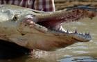Американец поймал древнюю двухметровую рыбу весом 77 кг