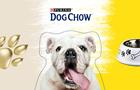 В рамках  Пробега под каштанами  проведут благотворительный  Пробег с собаками