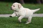 Любов до собак закладена в генах – вчені