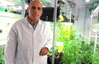 В Іспанії вчені створили першу  легальну  марихуану