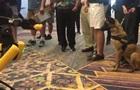 Игру робота-собаки и живой овчарки сняли на видео